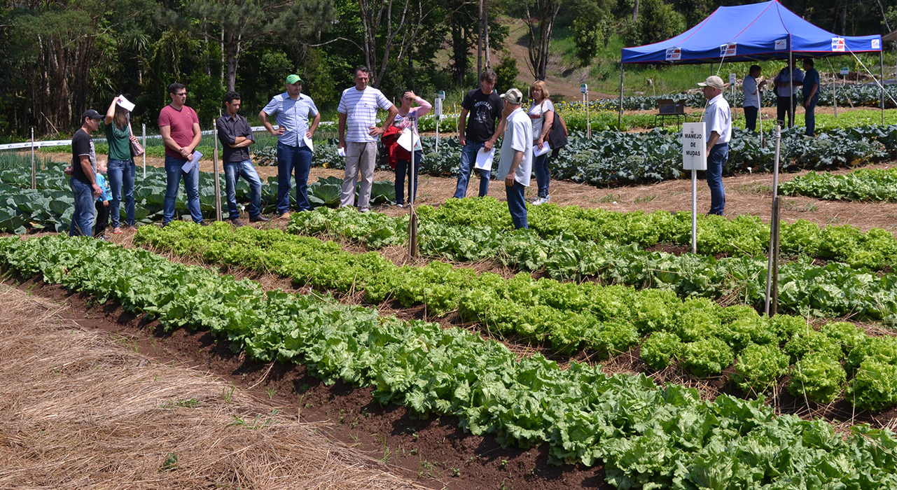 Cruz Machado realiza Mostra de Tecnologias Adaptadas na Horticultura